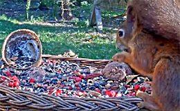 Веб камера Кормушка для птиц и животных в Animal Rescue Station Makov (Чехия)